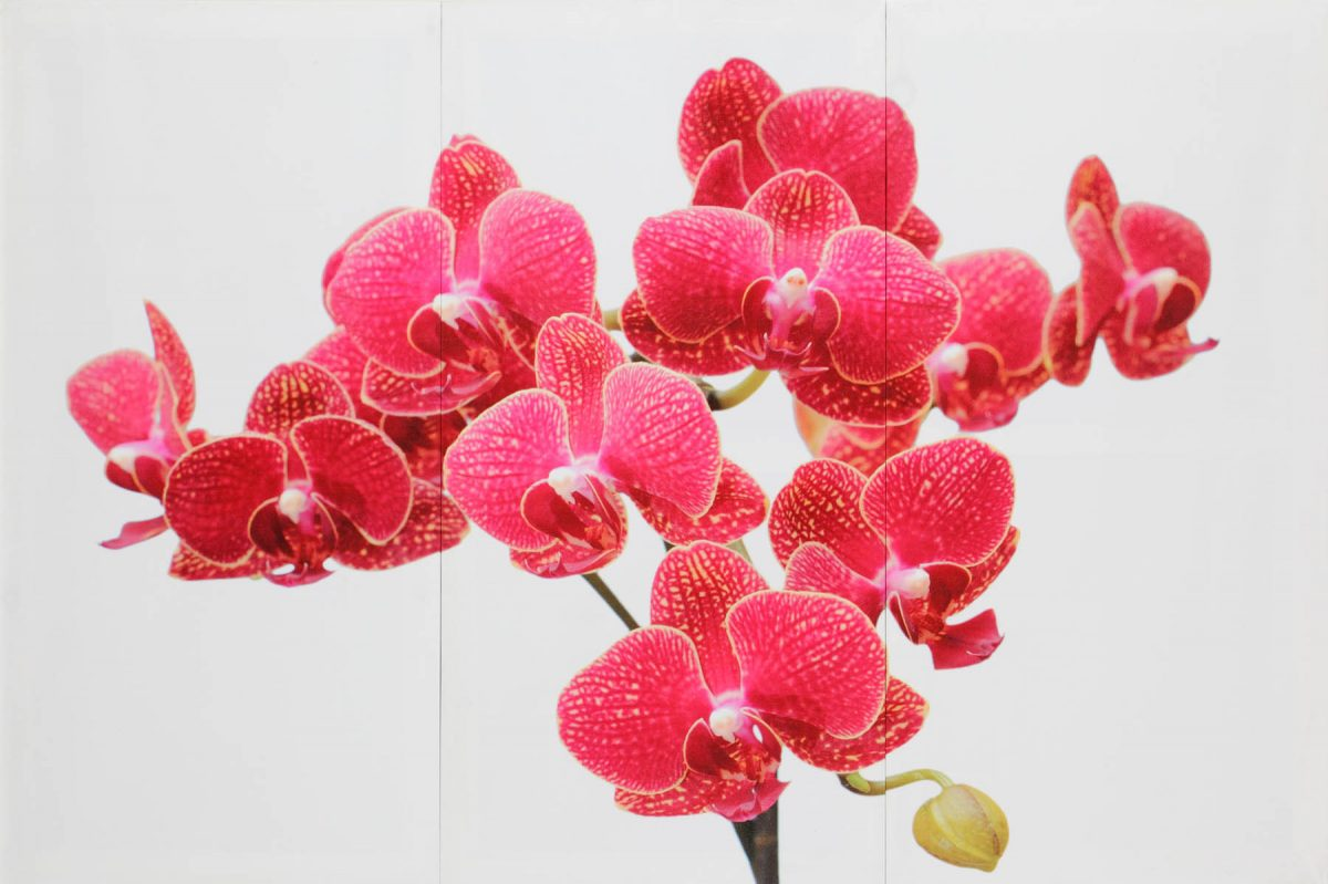 Set 3 canvas 30×60 orchid